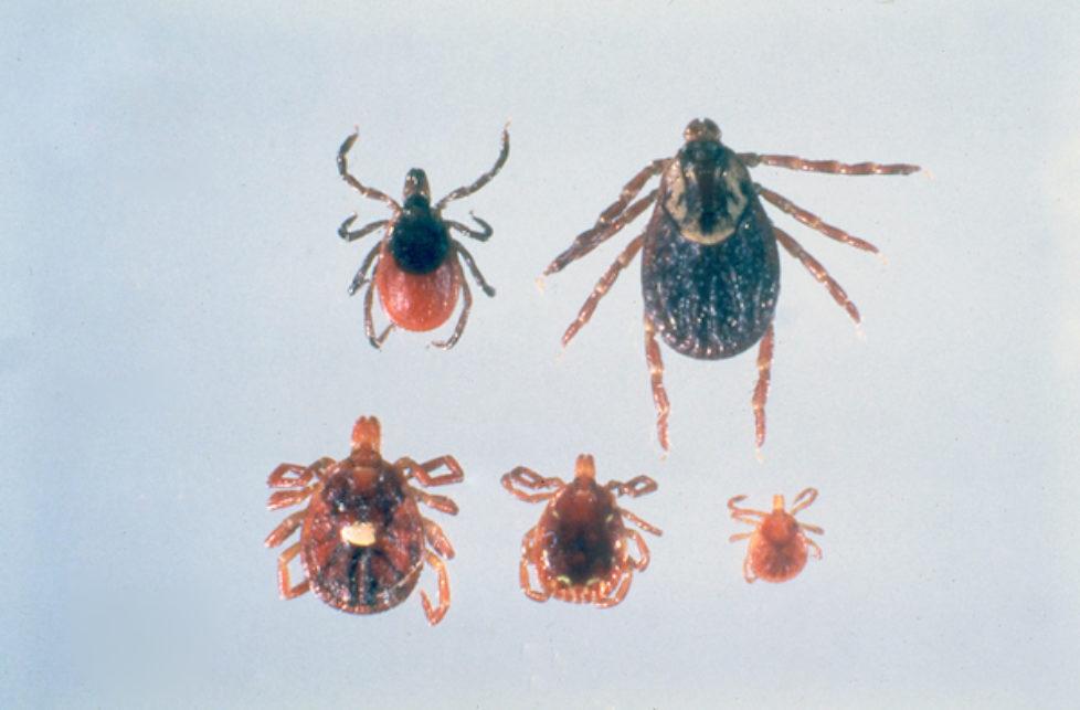 three nj species564