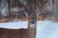 deer-3043033_1920